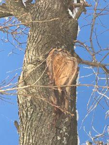 Bild: ein Baum mit einer Herzwunde, Quelle: Daniela Trattnigg