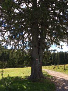 Paar Baum Daniela Trattnigg